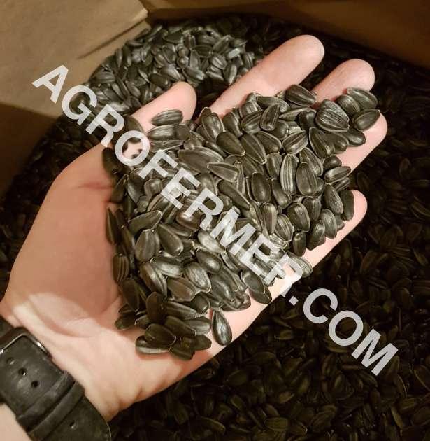 Семена подсолнечника VIKING F 696